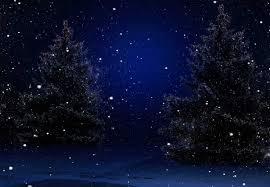 christmas trees at night bg racks
