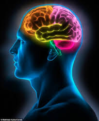 Cortical Blindness May Result From The Destruction Of Quit Smoking And It U0027reverses The Harmful Effects On The Brain