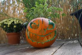 free images produce pumpkin halloween holiday art carving