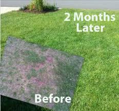 landscape landscape design yard service hardscapes lawn care