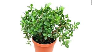 best indoor house plants best indoor house plants according to a houseplants safe for cats to