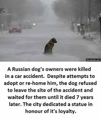 Dog Owner Meme - dopl3r com memes sarcasmlol conm a russian dogs owners were