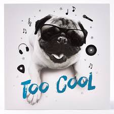 in store cool dj pug card card factory