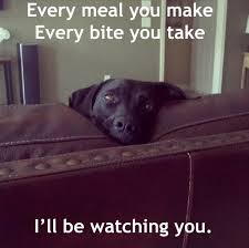 Black Lab Meme - every meal you make i love how every meme that uses these