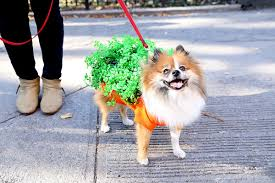 Dogs Halloween Costumes Dog Halloween Costumes Business Insider