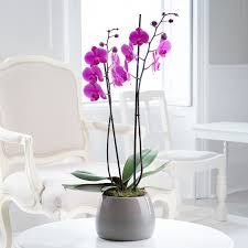 Orchid Plants Orchid Orchid Plants Pink White Blue Orchids Appleyard Flowers