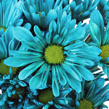 turquoise flowers blue flower
