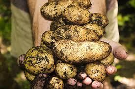 edible gardening for beginners vegetables labahn u0027s landscaping
