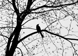 black and white bird in tree nature print tree photography