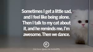 Awesome Quotes About Cats Being - 25 cute cat images with quotes for crazy cat ladies gentlemen and
