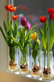 designs ideas indoor plants idea with colorful tulip flowers in