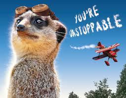 funny meerkat aviator inspirational card of encouragement