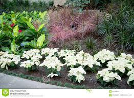 Inside Garden by Nice Indoor Garden Design Stock Photo Image 63792894