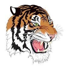 colored tiger design tiger tiger