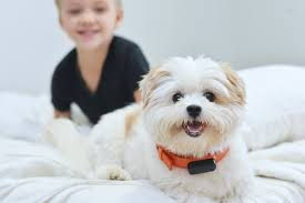 nuzzle gps pet tracking collar u0026 app for dogs u0026 cats nuzzle