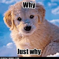 Puppy Memes - meme 2