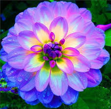 Nice Flower Picture - best 10 flower pictures ideas on pinterest flowers pretty