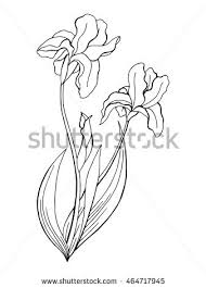 iris flower stock images royalty free images u0026 vectors shutterstock