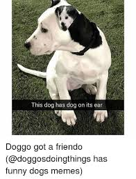 Dog Funny Meme - 25 best memes about funny dogs memes funny dogs memes