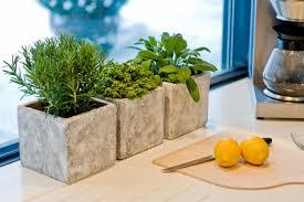 kräutertopf küche das grüne medienhaus gemüse obst kräuter pflanzen im winter