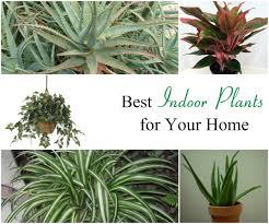 best office plants nasa 10 houseplants that improve indoor air
