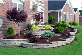 best types of trees for landscaping front backyard