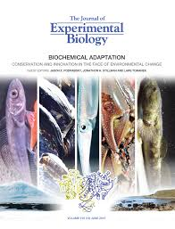 co evolution of proteins and solutions protein adaptation versus