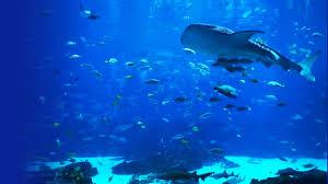 6 hours peaceful u0026 relaxing aquarium ocean voyager i for deep