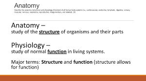 Anatomy Structure Of Human Body Human Body Anatomy And Physiology Hs20 Hb1 Analyze The Anatomy And