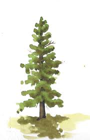how to paint trees evergreen trees youtube