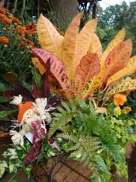 croton fall plants decorations decorating ideas arafen