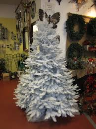 noble fir huntersgardencentre com