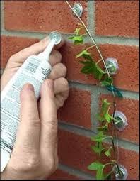 rose u0026 climbing vine wall trellis plant anchor kit