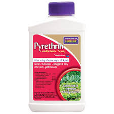 Insecticide For Vegetable Garden by Amazon Com Bonide Products 857 Pyrethrin Spray Concentrate 8