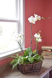 Orchid Centerpieces Know Before You Buy Learn The Real Meanings Of These 8 Popular