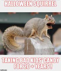 halloween squirrel imgflip