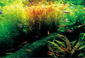 Most Beautiful Aquascapes Ada Nature Aquarium Nature Aquarium Starting From Zero