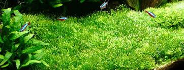 How To Aquascape A Planted Tank The 10 Best Freshwater Aquarium Plants For Beginners Aquascape