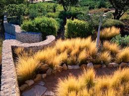53 best ornamental grass images on ornamental grasses