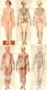 Female Anatomy Reference 255 Best Draw Human Anatomy Body Proportions Images On Pinterest