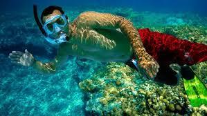 snorkeling images Key west snorkeling trips double dip snorkeling adventure jpg