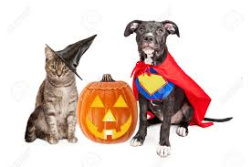 halloween cat images u0026 stock pictures royalty free halloween cat