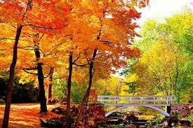 9 montreal fall foliage destinations you to see