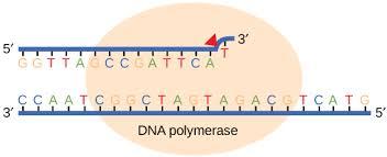 dna repair boundless biology