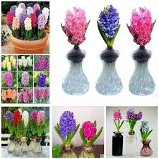 Plants Easy To Grow Indoors High Quality Growing Indoor Flowers Promotion Shop For High