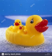 three little ducks stock photos u0026 three little ducks stock images