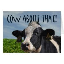 Cow Birthday Card Funny Cow Cards Greeting Photo Cards Zazzle