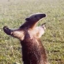Anteater Meme - fuck you i m an anteater meme generator