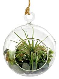 decor hanging terrarium ideas hanging terrarium hanging
