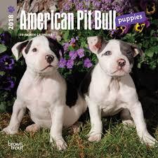 american pitbull terrier apbt american pit bull terrier puppiesmini wall calendar 9781465095718